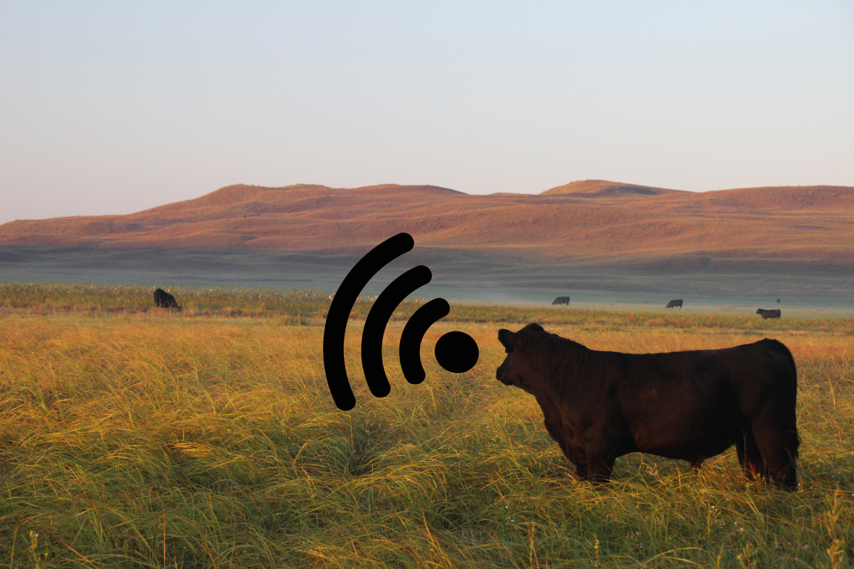 The Internet of Cows