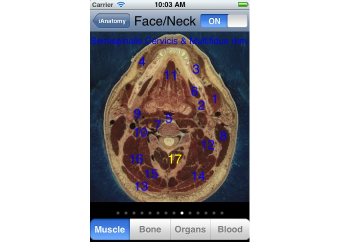 iAnatomy – screenshot 5