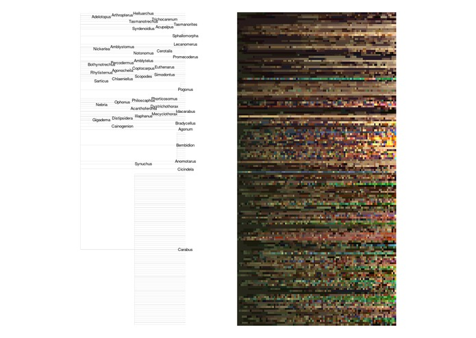 Colours from Specimen Images – screenshot 2