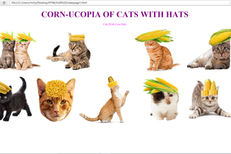 Cornucopia of Cats With Hats