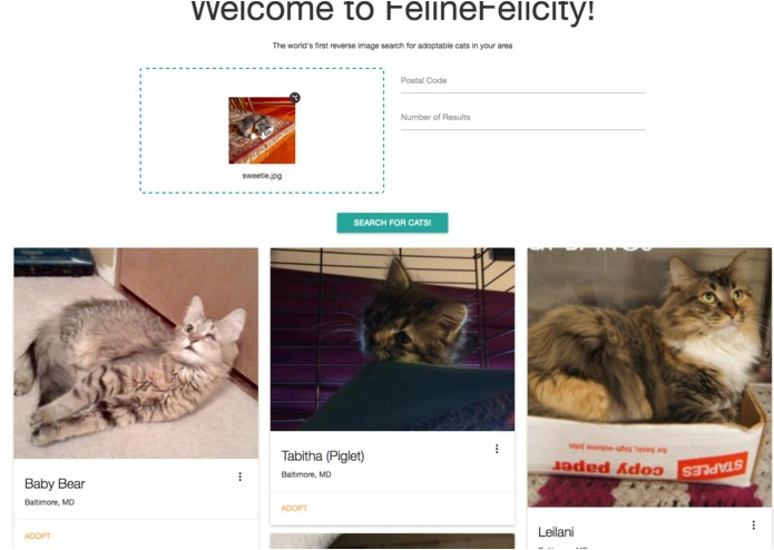 FelineFelicity – screenshot 2