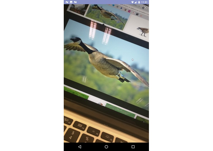 Goose Finder – screenshot 2