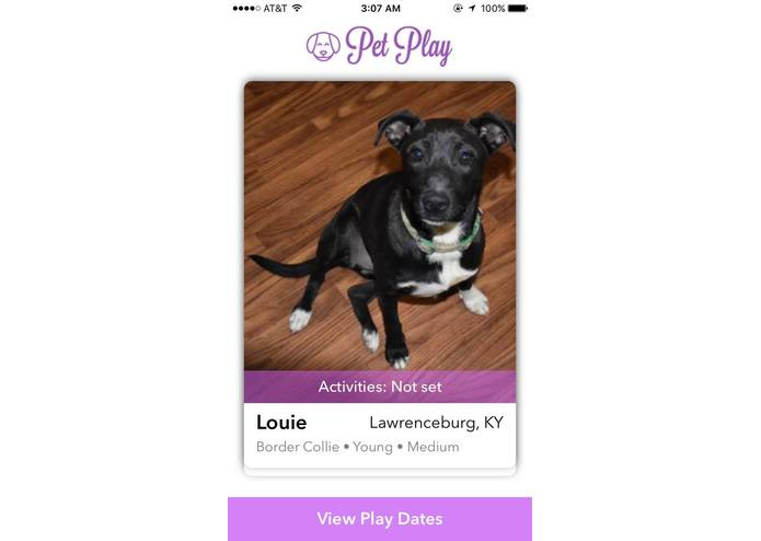 PetPlay – screenshot 2