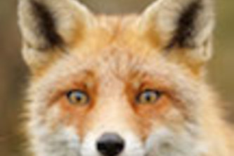 FoxFacts