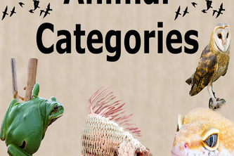 Animal Categories