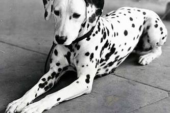 Website about dogs!