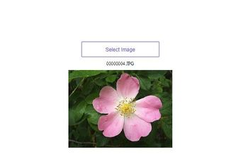 Identifying rose species from a given image