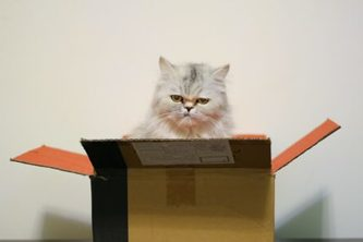 cat in the box [personal delivery for goods]