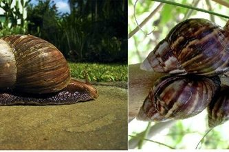 Online snail farming training:yes market but limited product