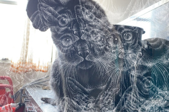 Cat Efects