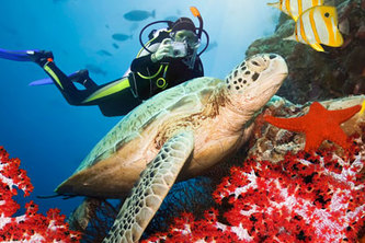 Padi Open water in hUrghada