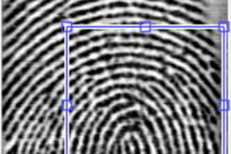 Fingerprint Palmistry