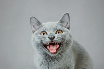 Cat Facts :: Great Uni Hack 2014