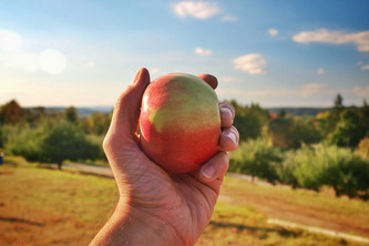 Apple Picking: Nostalgia for 2020