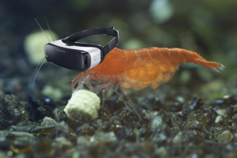 SHRIMP IN VR!