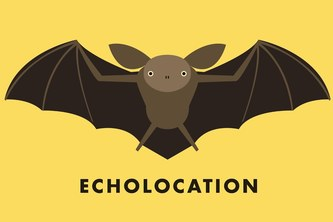 Echolocation, Feel the Distance