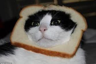 French Toast Kitty