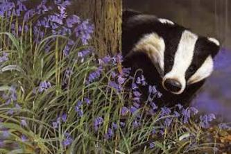 Sustainable Badger