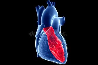 VENTRICLE