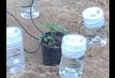Self irrigation container